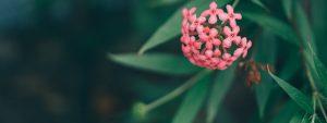 Rise flower header